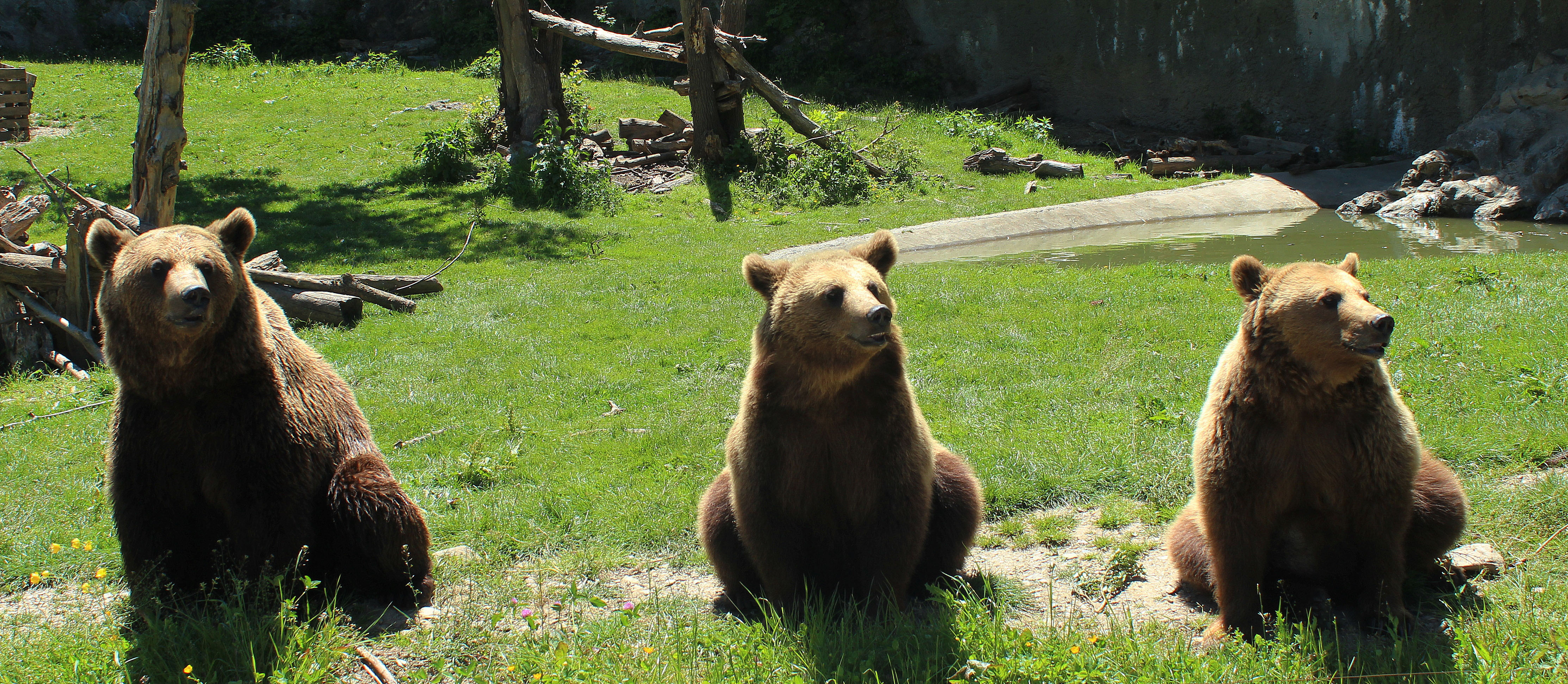 parc-ours_activites-bearn