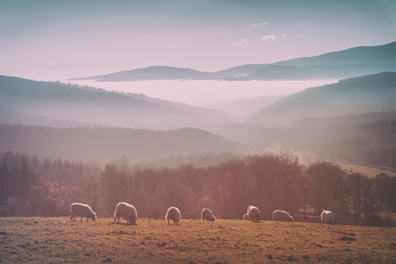 histoire-et-origine-du-beret-basque